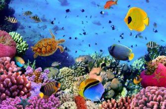 dekoracziya podvodnogo mira